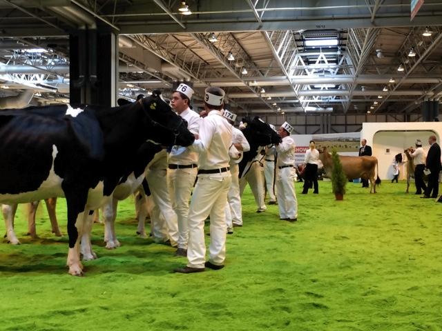 Cattle Pen Livestock Event in Birmingham