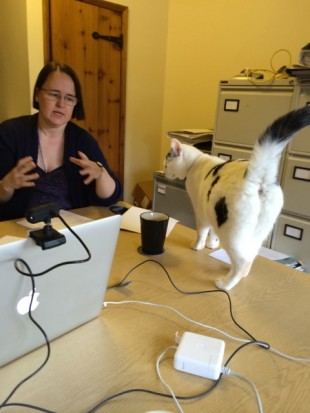 A cat arrives on the table while Cathy is researching