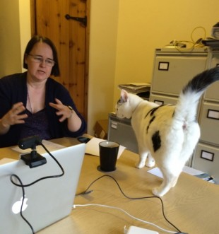 Surprise research participant, a cat, arrives on Cathy's desk